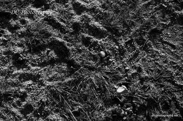 tracks_0554a