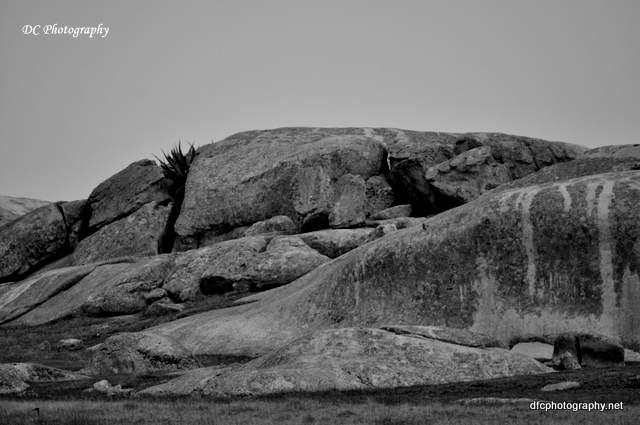dog-rocks_0036