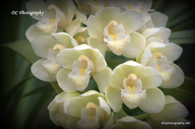 orchid_0001