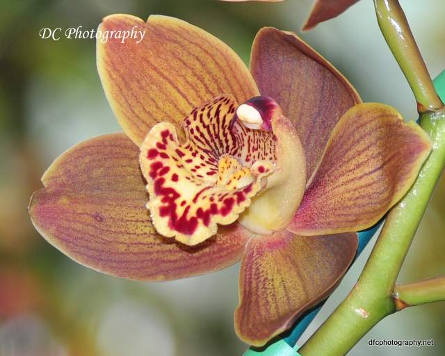orchid_0028