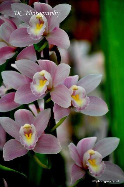 orchid_0035