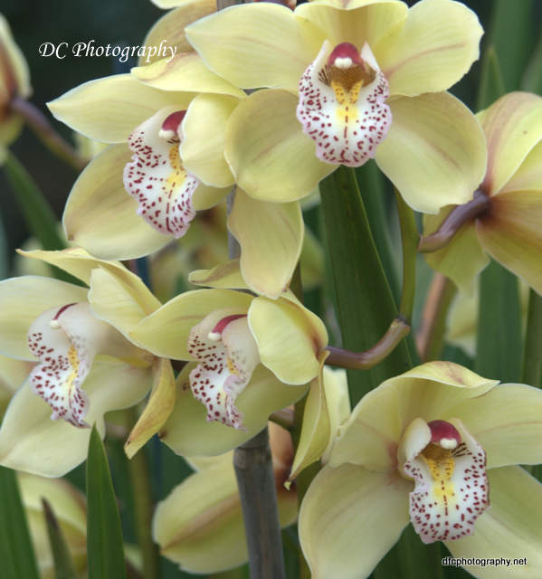 orchid_0052
