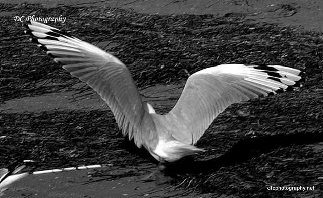 seagull_0063