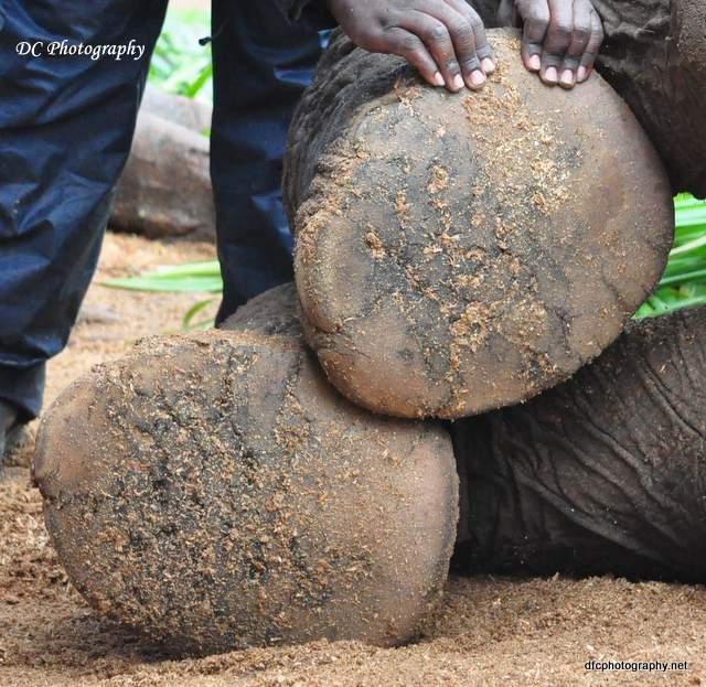 elephant_0238