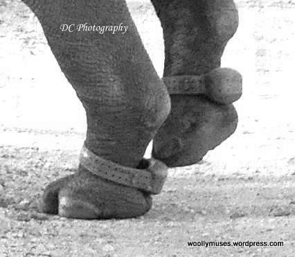 feet-rhino_0371