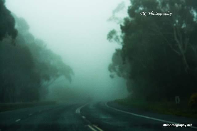 fog_7414