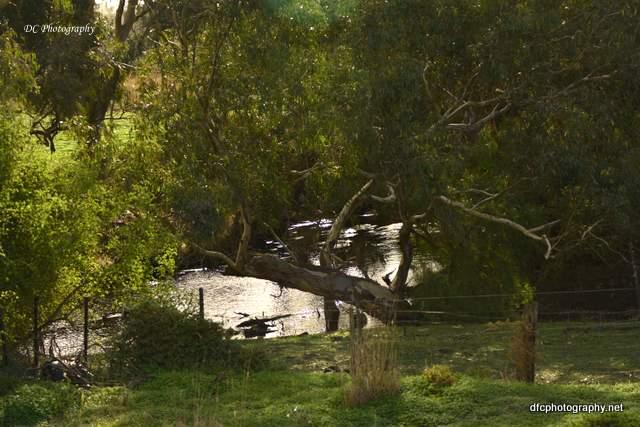 Moorabool-River_6222
