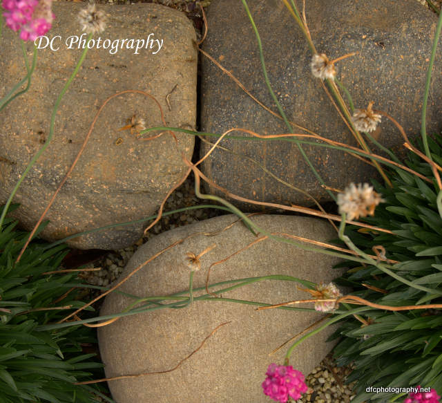 stones_7312