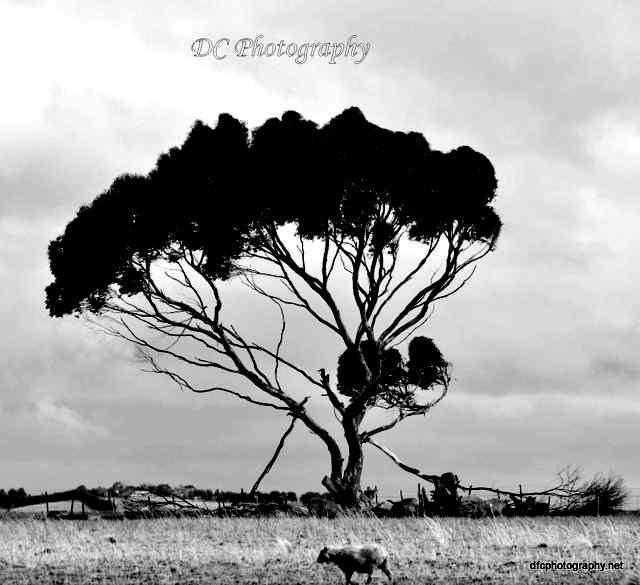 tree_021