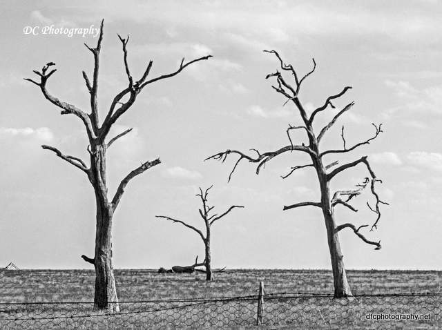 tree_6111