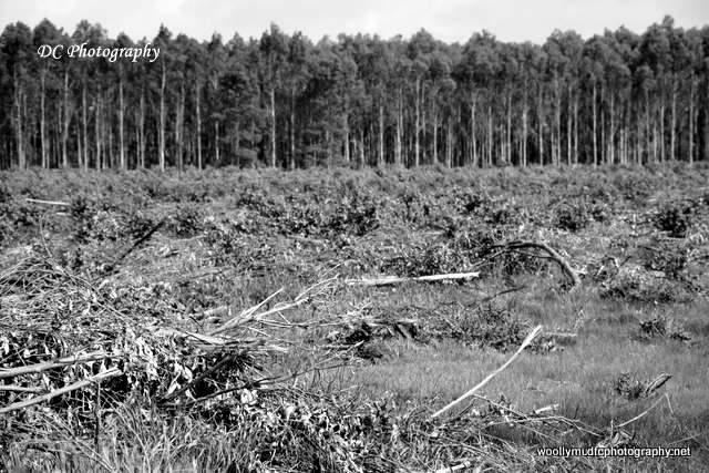 trees_1577