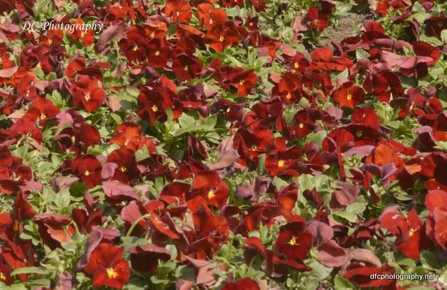 flower_7425