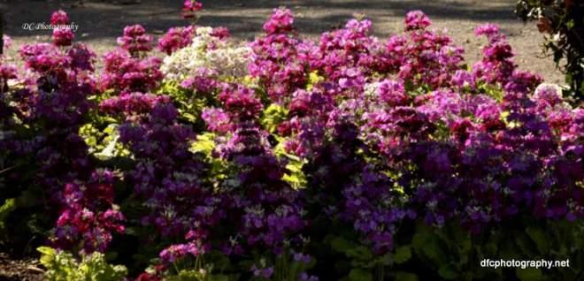 flowers_7492