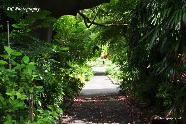 gardens_0075
