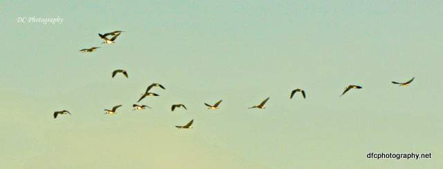 ibis_7659