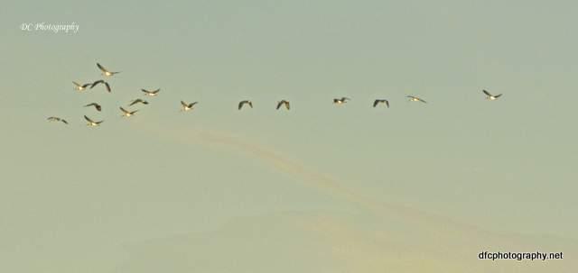 ibis_7660