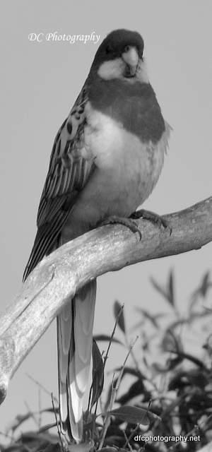 parrot_7435