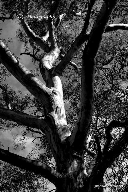 tree_7416