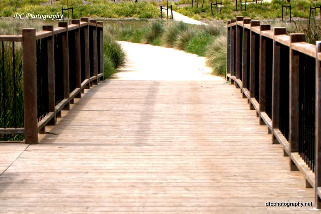 bridge_0031