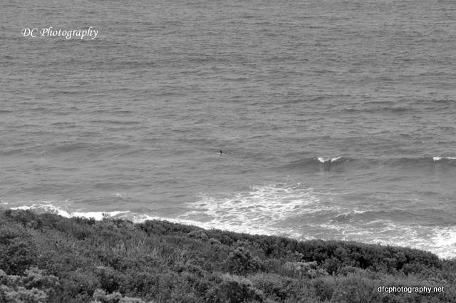 torquay-beach_0024