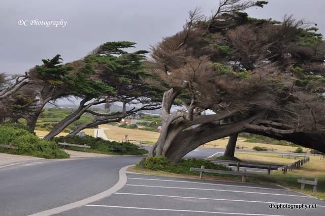 trees_0009