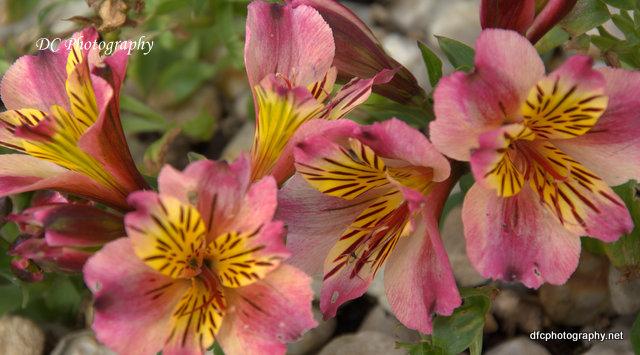 flower_8130