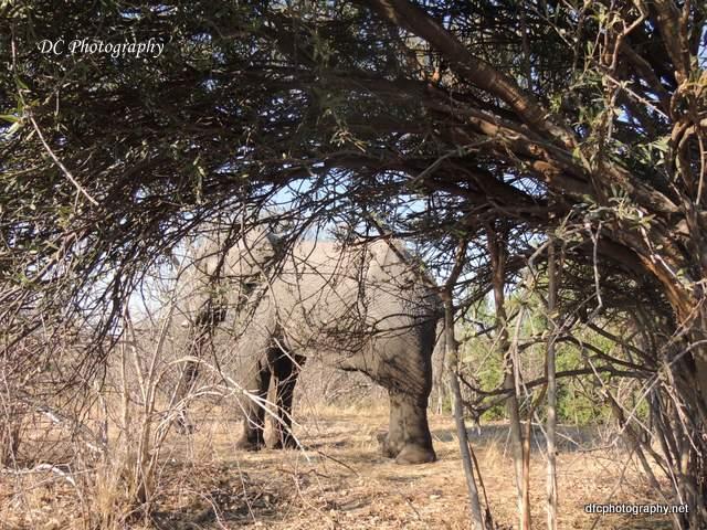 elephant_N2144