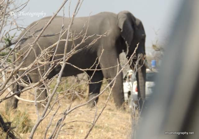 elephant_N2165