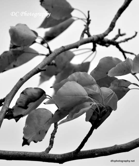 leaves_0023