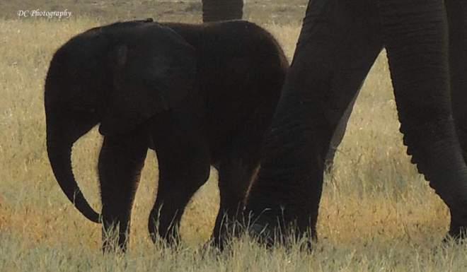 elephant_N2279
