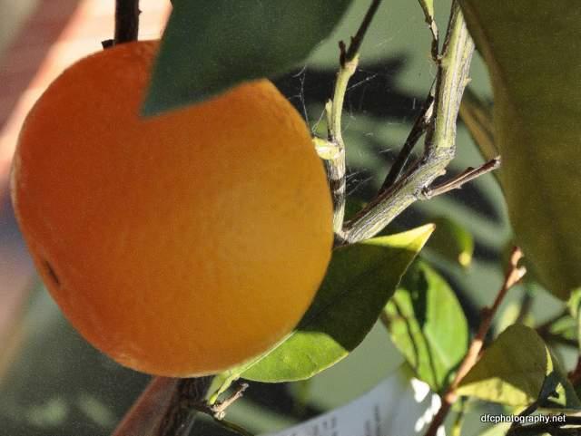 Orange_1868