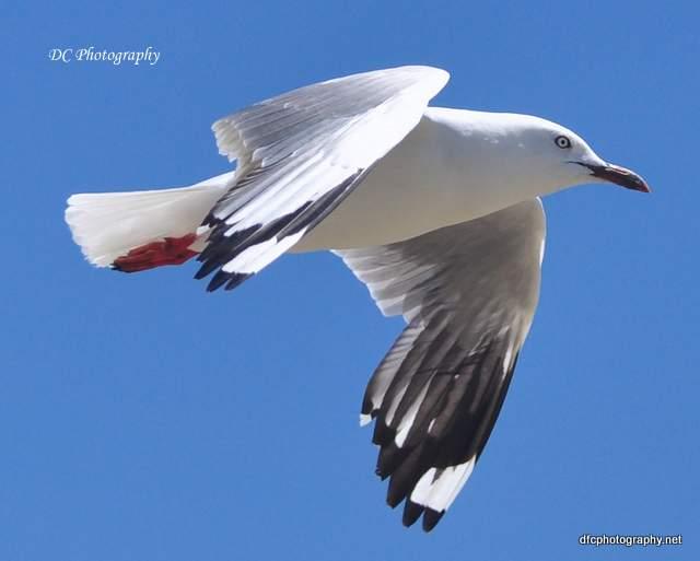 seagull_0649