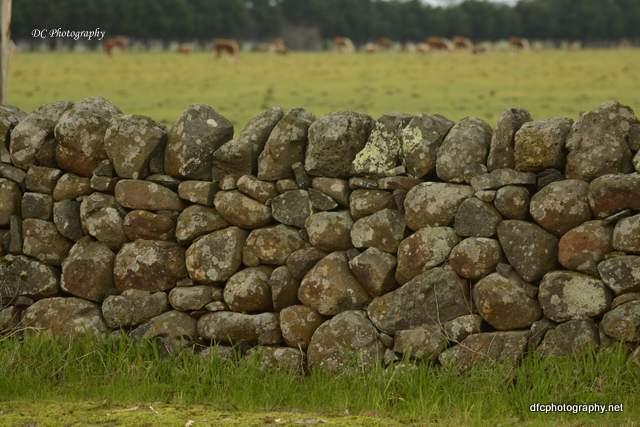 stonewall_6917 (2)