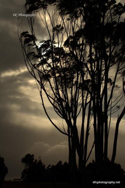 trees_6281