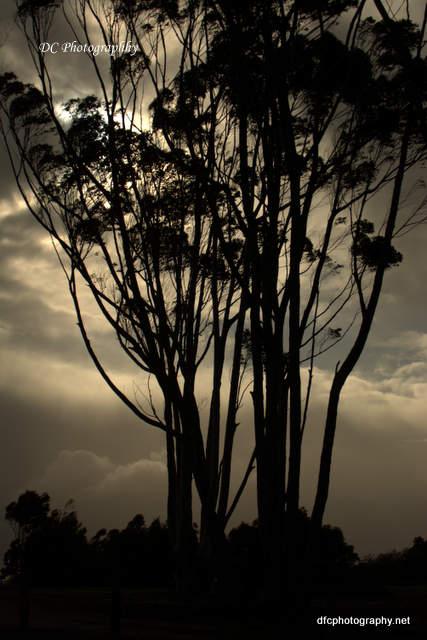 trees_6283