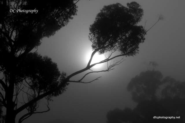fog_0006