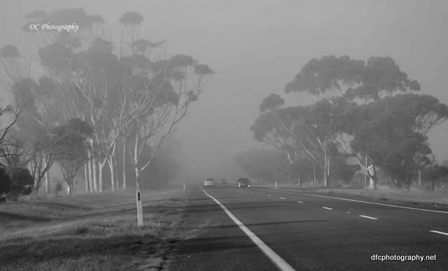 fogBRd_1878