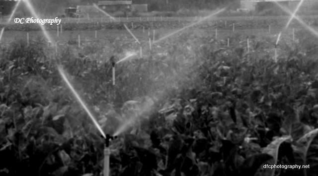 irrigation_1055