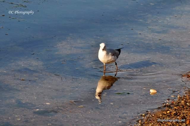 seagull_0111