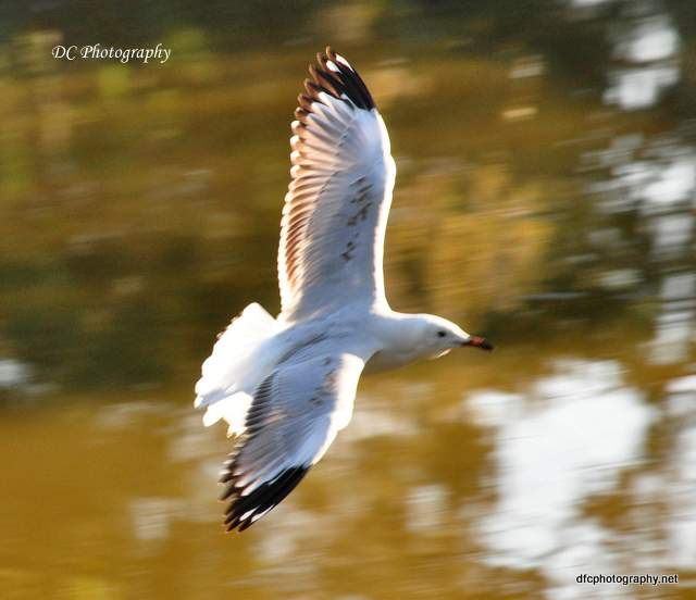 seagull_0113