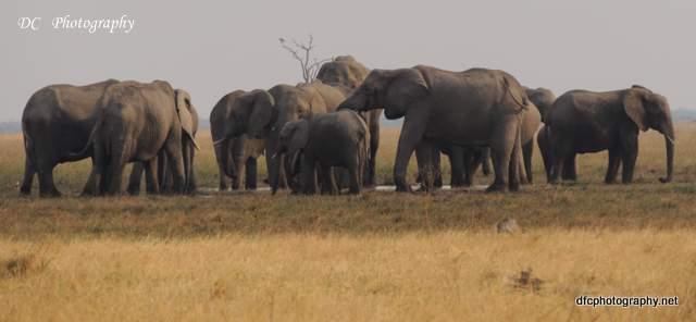 elephant_N2249