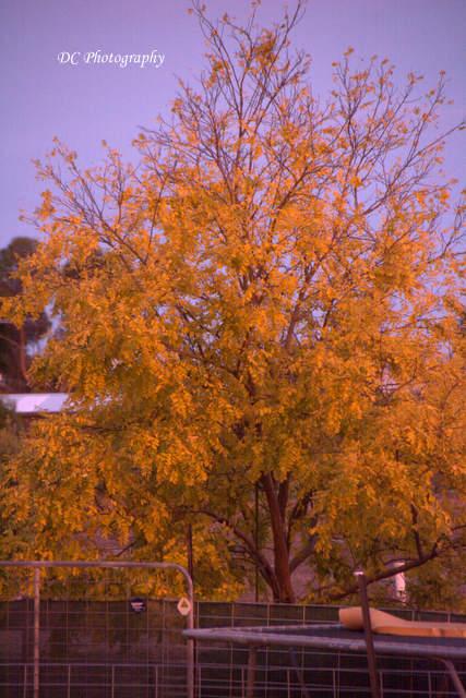 tree_9317