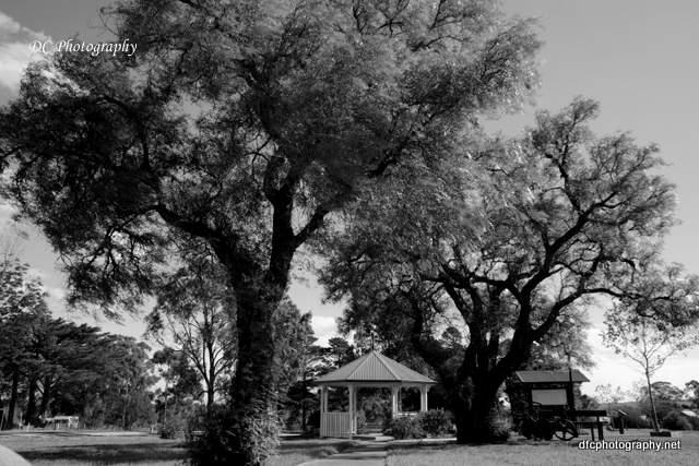 trees_9248