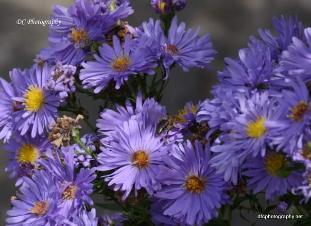 blue-flowe_8940