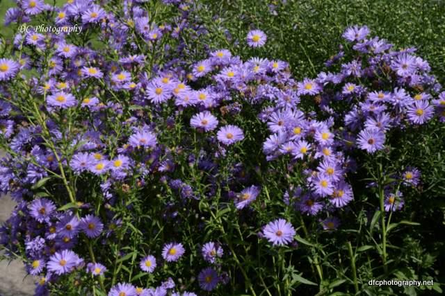 blue-flower_8938