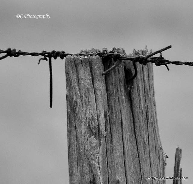 fence_0039-001