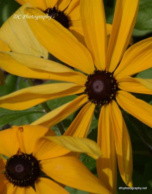 flower_8905