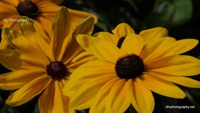 flower_8909