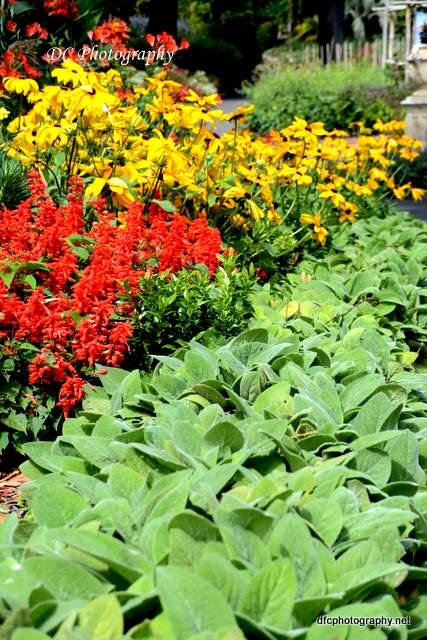 Geelong-Botanic-Gardens_8923