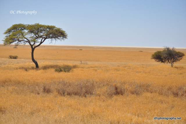 landscape_0292-001